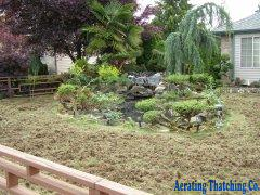 Picture of thatched lawn 2